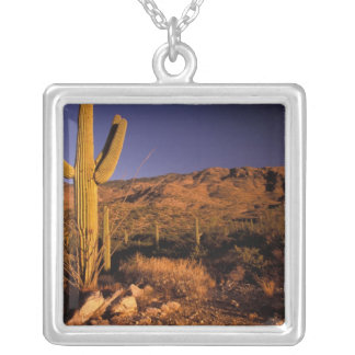 NA, USA, Arizona, Saguaro National Monument, Silver Plated Necklace