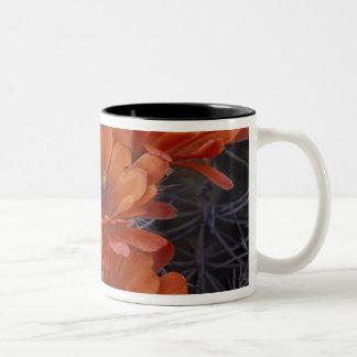 NA, USA, Arizona, San Xavier. Claret Cup cactus