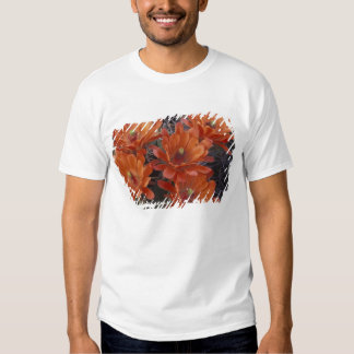 NA, USA, Arizona, San Xavier. Claret Cup cactus Shirts