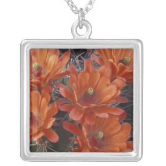 NA, USA, Arizona, San Xavier. Claret Cup cactus Silver Plated Necklace