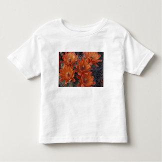 NA, USA, Arizona, San Xavier. Claret Cup cactus T Shirt
