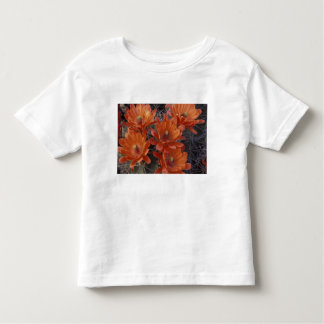 NA, USA, Arizona, San Xavier. Claret Cup cactus Toddler T-Shirt