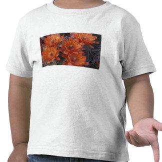 NA, USA, Arizona, San Xavier. Claret Cup cactus Shirt