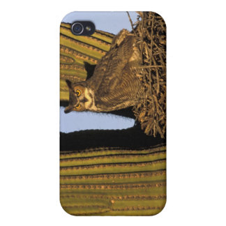 NA, USA, Arizona, Tucson. Great horned owl on Case For The iPhone 4