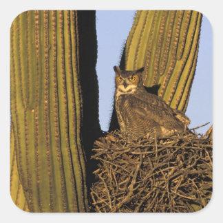 NA, USA, Arizona, Tucson. Great horned owl on Square Sticker