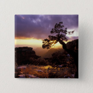 NA, USA, Arizona, Tucson, Sunset and lone 15 Cm Square Badge