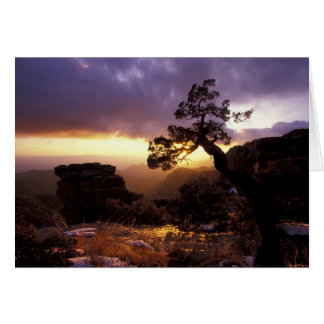 NA, USA, Arizona, Tucson, Sunset and lone Card