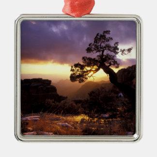 NA, USA, Arizona, Tucson, Sunset and lone Christmas Ornament