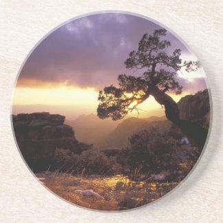 NA, USA, Arizona, Tucson, Sunset and lone Coaster