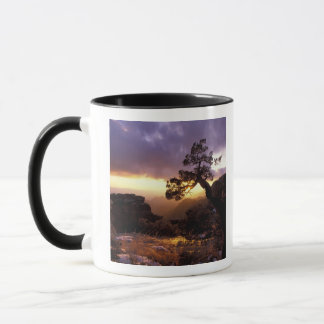 NA, USA, Arizona, Tucson, Sunset and lone Mug