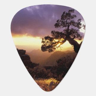 NA, USA, Arizona, Tucson, Sunset and lone Plectrum