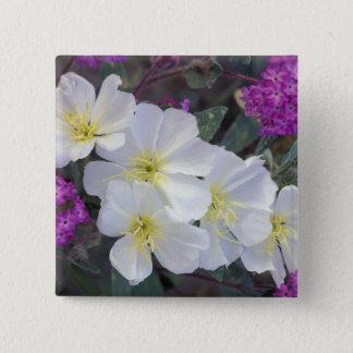 NA, USA, California, Anza Borrego Desert State 15 Cm Square Badge