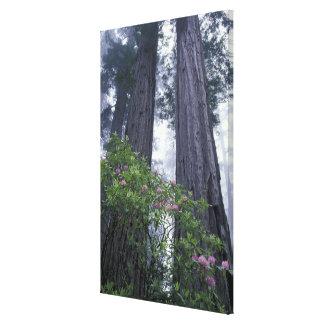 NA, USA, California. Del Norte Coast State Park. 2 Gallery Wrapped Canvas