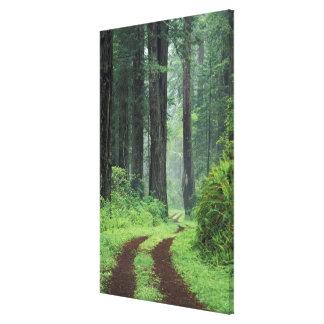 NA, USA, California. Del Norte Coast State Park. 3 Canvas Print