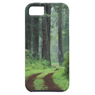 NA, USA, California. Del Norte Coast State Park. 3 iPhone 5 Cover
