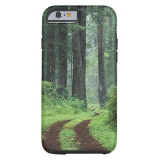 NA USA California Del Norte Coast State Park 3 iPhone 6 Case