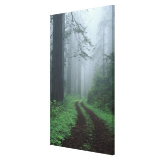 NA, USA, California. Del Norte Coast State Park. Canvas Print