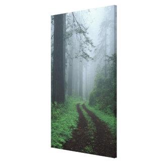 NA, USA, California. Del Norte Coast State Park. Stretched Canvas Print