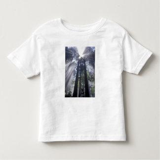 NA, USA, California. Del Norte Coast State Toddler T-Shirt
