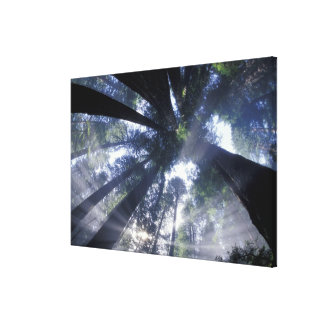 NA, USA, California, Del Norte Redwoods State Gallery Wrap Canvas