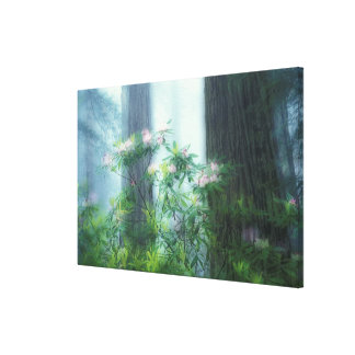 NA, USA, California, Del Norte Redwoods State Canvas Print