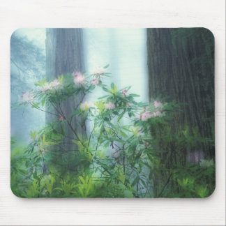 NA, USA, California, Del Norte Redwoods State Mouse Mat