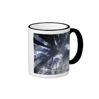 NA, USA, California, Del Norte Redwoods State Coffee Mugs