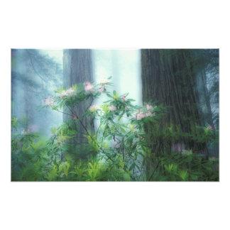 NA, USA, California, Del Norte Redwoods State Photo Print