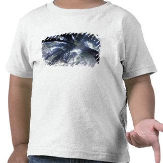 NA, USA, California, Del Norte Redwoods State Tshirt