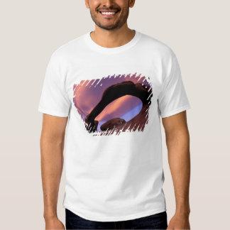 NA, USA, California, Eastern Sierra, Alabama T Shirts