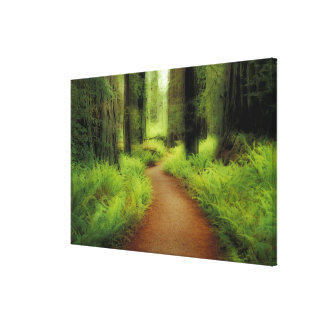 NA, USA, California, Jedediah Smith Redwoods Stretched Canvas Print