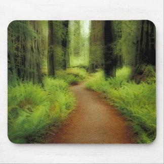 NA USA California Jedediah Smith Redwoods Mousepad