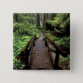 NA, USA, California, Jedidiah Smith Redwoods 15 Cm Square Badge