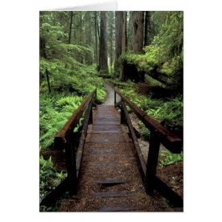 NA, USA, California, Jedidiah Smith Redwoods Card