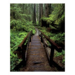 NA, USA, California, Jedidiah Smith Redwoods Poster