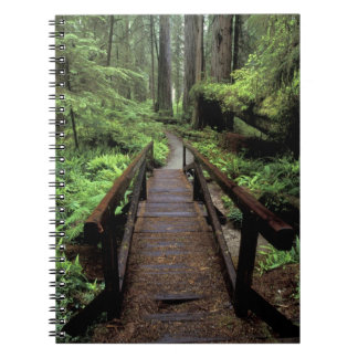 NA, USA, California, Jedidiah Smith Redwoods Spiral Notebook