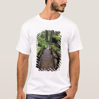 NA, USA, California, Jedidiah Smith Redwoods T-Shirt