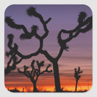 NA, USA, California. Joshua Tree National Square Sticker