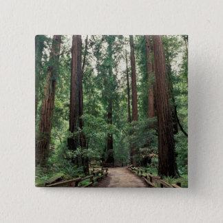NA, USA, California, Marin County, Muir Woods 15 Cm Square Badge