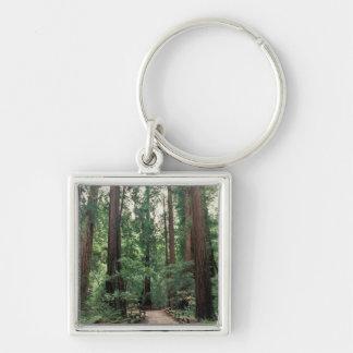 NA, USA, California, Marin County, Muir Woods Key Ring