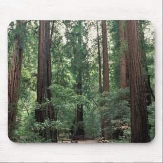 NA, USA, California, Marin County, Muir Woods Mouse Mat