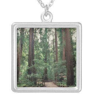 NA, USA, California, Marin County, Muir Woods Silver Plated Necklace