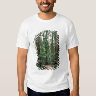 NA, USA, California, Marin County, Muir Woods T-shirt