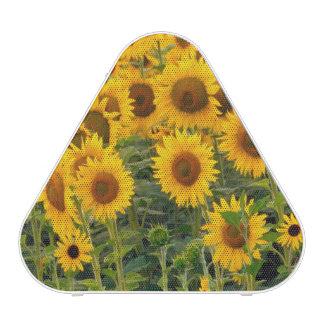 Na, USA, Colorado, Sunflowers