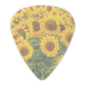 Na, USA, Colorado, Sunflowers Acetal Guitar Pick