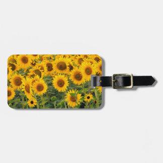 Na, USA, Colorado, Sunflowers Bag Tag