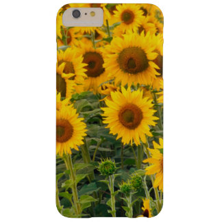 Na, USA, Colorado, Sunflowers Barely There iPhone 6 Plus Case