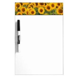Na, USA, Colorado, Sunflowers Dry Erase Board