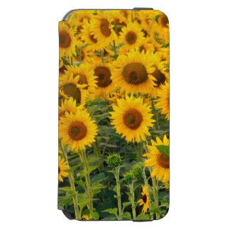 Na, USA, Colorado, Sunflowers Incipio Watson™ iPhone 6 Wallet Case