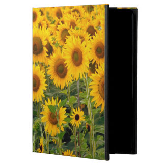 Na, USA, Colorado, Sunflowers iPad Air Case